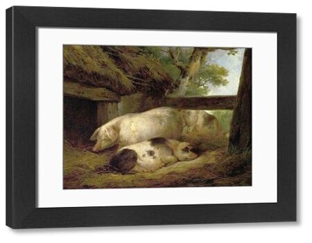 Artist: Morland, George - Title: Study of Pigs - Date: N/A - Original Medium and Size: Oil on Wood 29.2 x 38.1