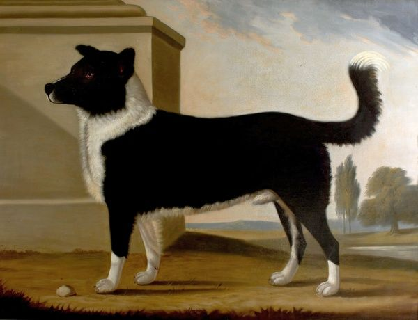 Artist: Tomson, Clifton - Title: Lord Byron's Dog 'Boatswain' (1803-1808)(The Newfoundland) - Date: 1808 - Original Medium and Size: Oil on Canvas 135 x 171