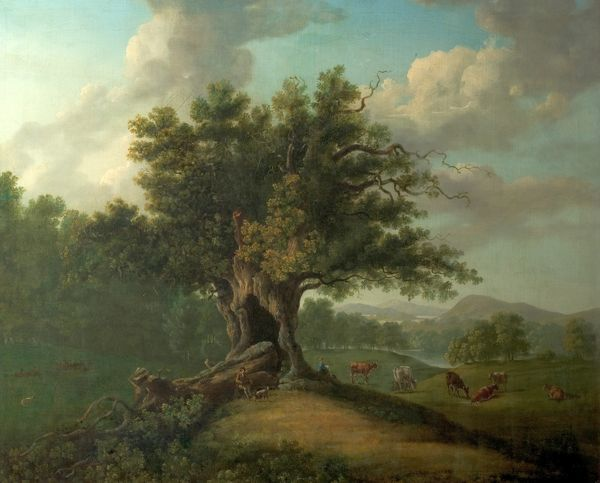 Artist: British (English) School - Title: An Oak in Moccas Park, Herefordshire - Date: N/A - Original Medium and Size: Oil on Canvas 76.2 x 106.7
