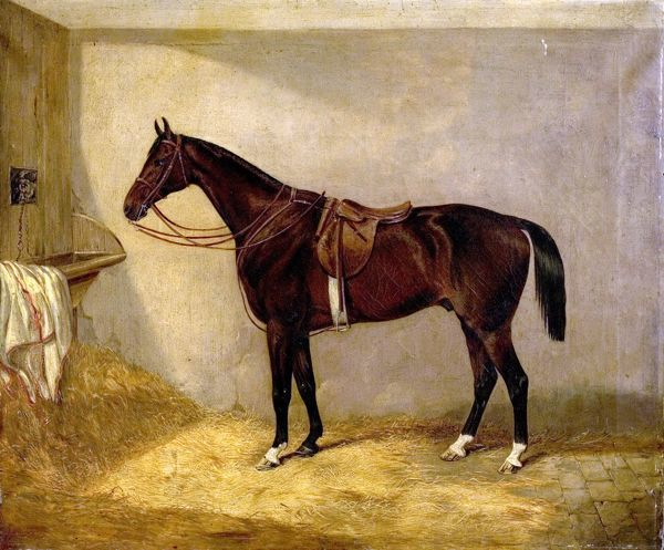 Artist: Bretland, Thoman W. - Title: Portrait of the Horse, Which Belonged to Major Burton at the Balaklava Charge - Date: N/A - Original Medium and Size: Oil on Canvas 63.5 x 76.2