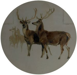 Deer in a Landscape (Studies of Deer) - Edwin Henry Landseer